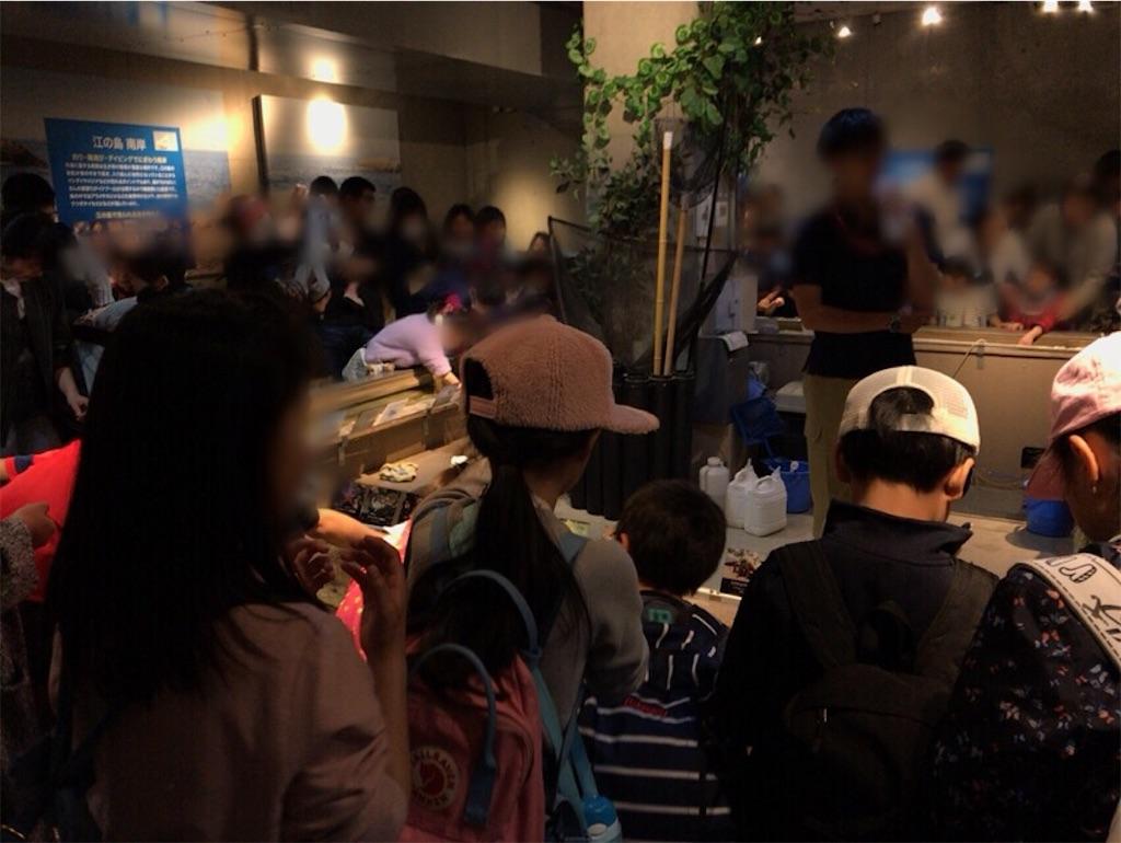 新江ノ島水族館カワウソ