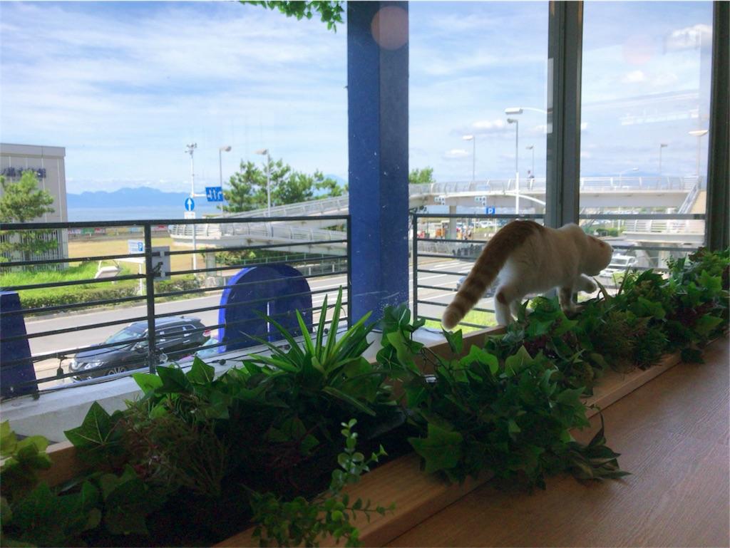江ノ島の猫カフェ「空陸家」